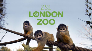 20% off Entry Tickets For Spectators  at London Zoo