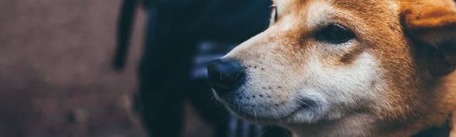 Direct Line Pet Insurance Discount Codes